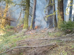 The Goal Of Burnout Operations Is To Reduce Fuel Loads Next To Established Firelines. Credit: Washington Interagency Incident Management Team #4