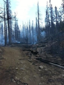 Area where subalpine trees, woody debris and ground vegetation have been mostly consumed by the fire. Credit: Washington Interagency Incident Management Team #4