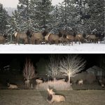 FEBRUARY 04, 2021 HEADLINES – Northern Kittitas County Tribune